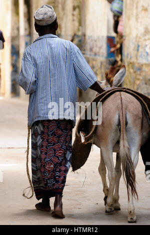 The resident of the Lamu archipelago is walking beside the donkey which serves him to for moving on an island as - Stock Photo