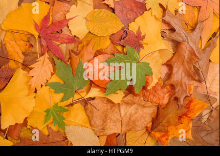 background made of fallen dried autumn leaves - Stock Photo