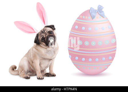 funny pug puppy dog with bunny ears diadem sitting next to big pastel pink easter egg, isolated on white background - Stock Photo