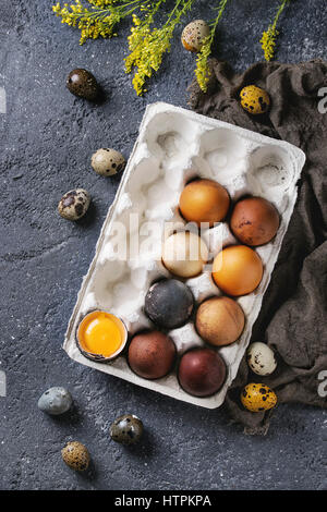 Brown and gray colored chicken and quail Easter eggs in paper box with yolk, yellow flowers, sackcloth rag over - Stock Photo