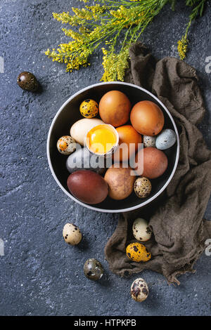 Brown and gray colored chicken and quail Easter eggs in black ceramic bowl with yolk, yellow flowers, sackcloth - Stock Photo