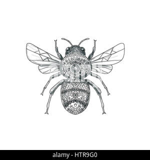 Tattoo style illustration of a bumblebee or bumble bee, a member of the genus Bombus, part of Apidae, one of the - Stock Photo