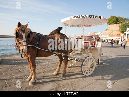 Dog on horse's back; horse drawn taxi at Venetian Harbour in old town Chania on the island of Crete - Stock Photo