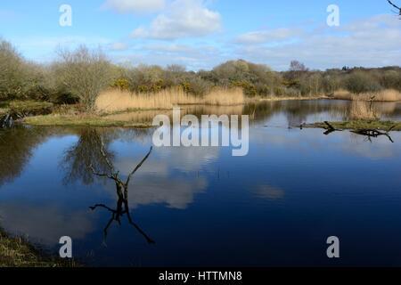 Welsh wildlife Centre Teifi marshes Cilgerran  view from hide pembrokeshire Wales Cymru UK GB - Stock Photo