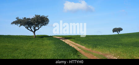 Rural countryside scene near Santo António do Baldio, Alentejo, Portugal.  Tree, track and green field. Panoramic - Stock Photo