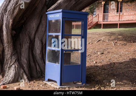 Blue phone box with old tree in Tasmania, Australia - Stock Photo