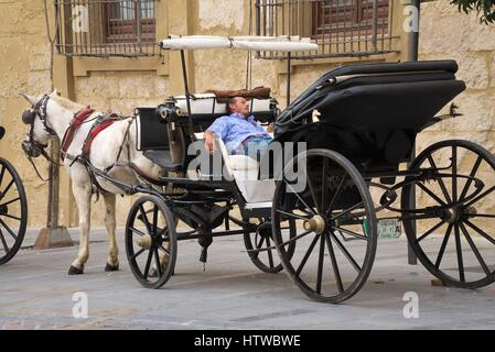 Horse carriages in the vicinity of the Mosque of Cordoba waiting for customers - Stock Photo