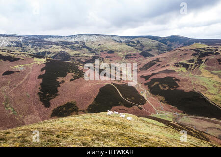 Looking south west from Philliphope near Hownam towards Beefstand Hill (562m) and the Anglo Scottish Border in the - Stock Photo