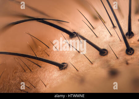 Extreme magnification - Fly face details at 20x - Stock Photo