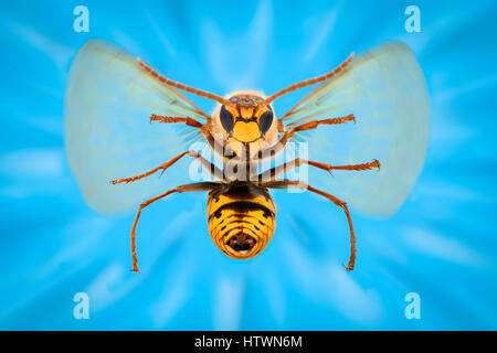 Extreme magnification - Giant Wasp anatomy - Stock Photo