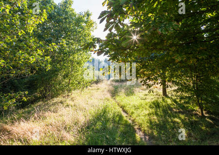 Sunlight shining through the trees on a Summer morning, Nottinghamshire, England, UK - Stock Photo