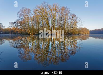 Grey Heron (Ardea cinerea), colony Bramfelder See, Hamburg, Germany - Stock Photo