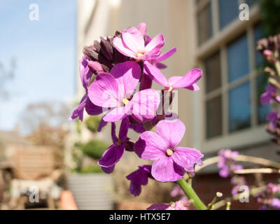 A shot of some purple flowers up close. - Stock Photo