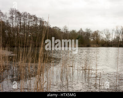 Wivenhoe lake in all it's reeded glory. - Stock Photo