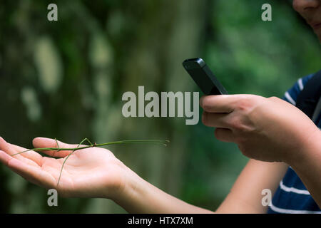 A young woman with a stick insect in one hand and taking photos on her smart phone with the other. - Stock Photo
