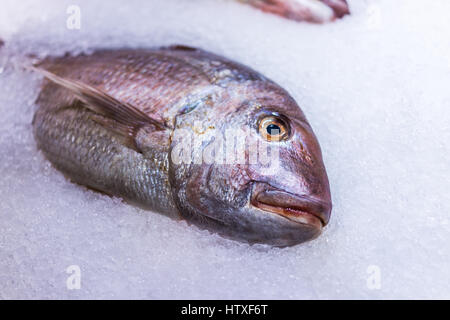 Red thai snapper whole fish on ice on display in market - Stock Photo