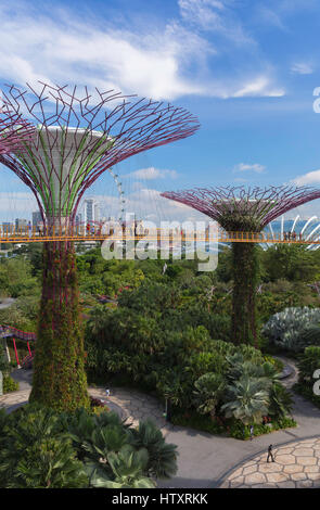 Supertrees at Gardens by the Bay, Singapore - Stock Photo