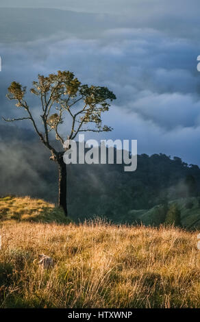 Lonely tree on a top of a ridge of Gunung Rinjani volcano in Lombok island, Indonesia