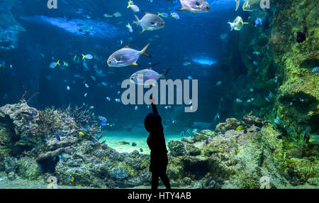 Happy kid observing fishes swimming in a large aquarium - Stock Photo