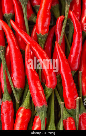 A lot of red hot chilli peppers as background. a concept hot spice for food. top view, flat lay. Concept red food, - Stock Photo