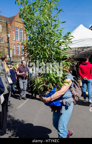 London, United Kingdom - April 17, 2015: A woman carries a large plant in full growth in her arms - Stock Photo