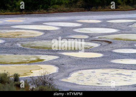 Spotted Lake, a saline endorheic alkali lake, northwest of Osoyoos in the eastern Similkameen Valley, British Columbia, - Stock Photo