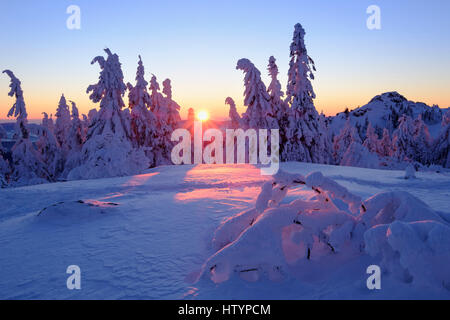Sunset, Arbermandl, snowy spruces, Arber, Natural Preserve Bavarian Forest, Lower Bavaria, Bavaria, Germany - Stock Photo