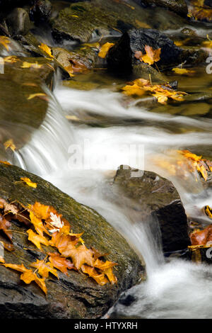 Water flowing downstream fall creek with leaves motion blur. - Stock Photo
