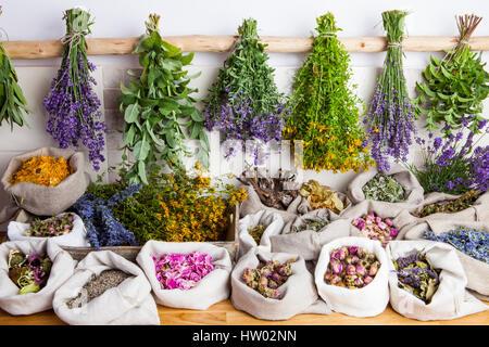 Healing medical herbs - Stock Photo
