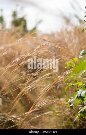 Grasses along hiking trail at Black Point Wildlife Drive, Merritt Island National Wildlife Refuge, FL - Stock Photo