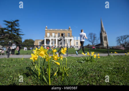 London, UK. 15th Mar, 2017.UK weather. Beautiful, sunny, spring day with daffodils in Finsbury Park and Clissold - Stock Photo