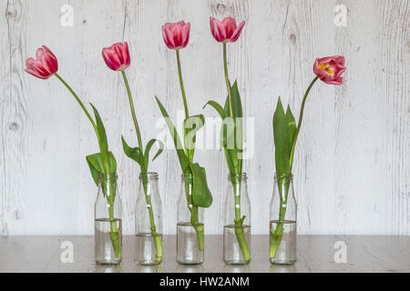 pink tulips in glass bottles on light wooden background - Stock Photo