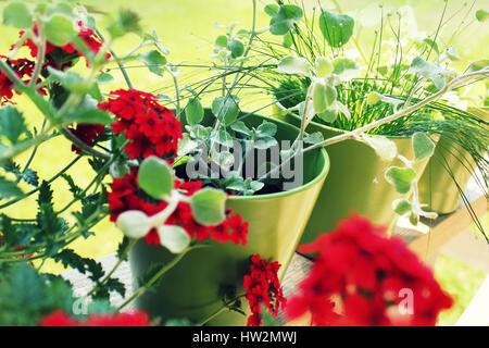Flowers in pots on terrace - Stock Photo