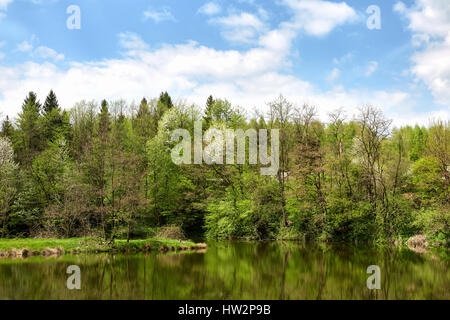 Beautiful view of lake in forest. Summer. - Stock Photo