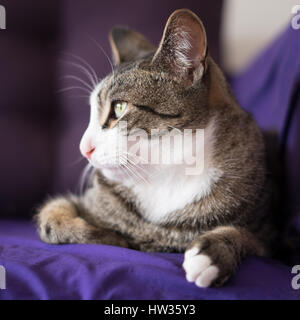 Adorable Closeup Cat Portrait on the Couch - Stock Photo