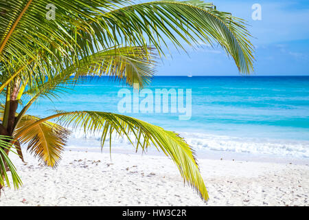 Palm branches on tropical white sandy beach background. Caribbean Sea coast, Dominican republic, Saona island - Stock Photo