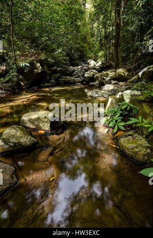 A still clear rocky stream leading through a dense rain forest jungle with trees and plants. - Stock Photo