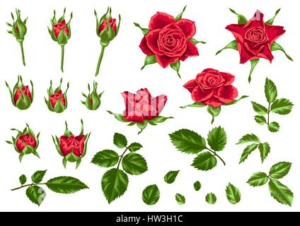 Set of decorative red roses. Beautiful realistic flowers, buds and leaves. - Stock Photo