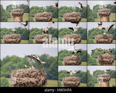 Stork on nest - Stock Photo