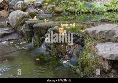 Fern Spring, Yosemite National Park, CA, USA - Stock Photo
