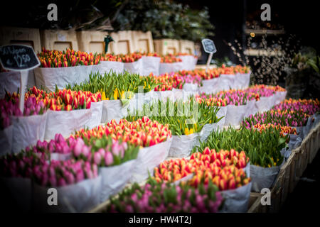 Colorful Tulip Flower Market - Stock Photo