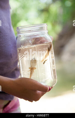 Tadpoles in a jar - Stock Photo