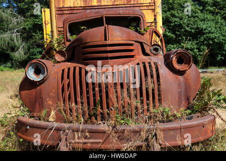 Plants growing out of vintage truck, scrap car, Chevrolet, Kestner Homestaed, Olympic Peninsula, Olympic National - Stock Photo
