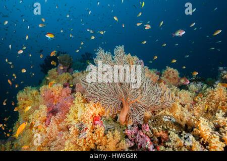 Colored Coral Reef, Felidhu Atoll, Maldives - Stock Photo