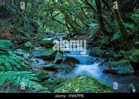 Soft flowing water passing through the New Zealand wonderful native bush. - Stock Photo