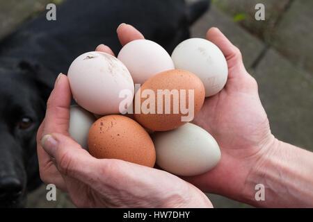 Hands holding freerange eggs - Stock Photo