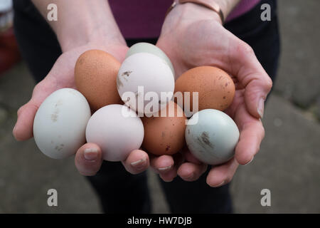 Hands holding out varied fresh laid eggs - Stock Photo