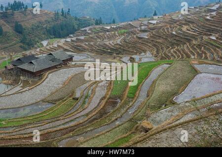 China, Guizhou, Jiabang, terraced rice fields - Stock Photo