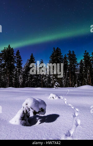 Red fox tracks and the northern lights - Stock Photo
