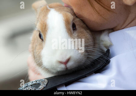 Animal rescue worker holding rabbit - Stock Photo
